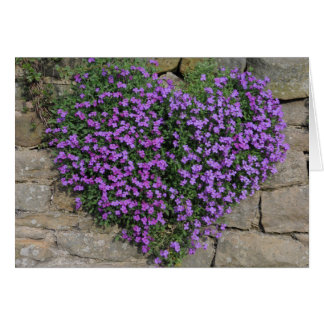 Love Flowers: Yorkshire 'Wall-Flowers' Card