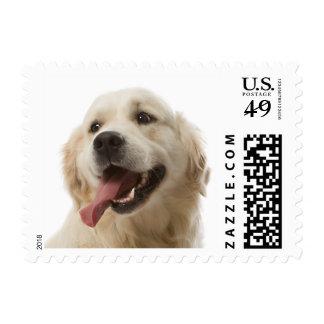Love Golden Retriever Puppy Dog US Postage Stamps