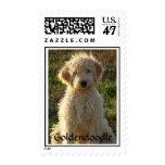 Love Goldendoodle Puppy Dog US Postage Stamps