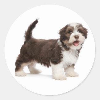 Love Havanese Chocolate Brown Puppy Dog Hello Classic Round Sticker
