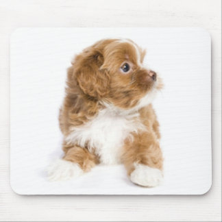 Love Havanese Puppy Dog Mousepad