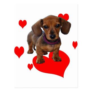 Love (Hearts) Dachsies - Dachshund Postcard
