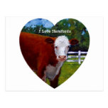 Love Herefords: Original Oil Painting, Cows Postcards