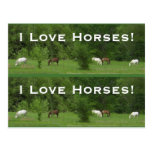 Love Horses! Bookmarkers - Customize! Post Card