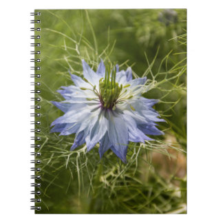 Love in the Mist Flower Notebook