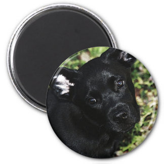 Love Is A Black Pup Magnet