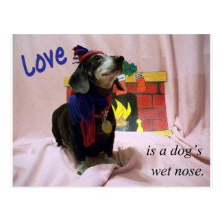Love is a dog's wet nose postcard