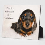 Love is being owned by a Dachshund Display Plaques