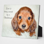 Love is being owned by a Dachshund Photo Plaques