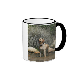 Love is being owned by a Yellow Lab Ringer Coffee Mug