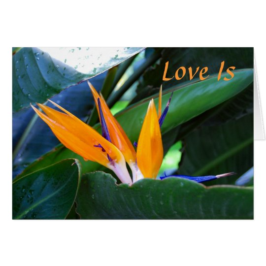 Love Is - bird-of-paradise - love Card