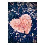 Love is Fragile Photography Card