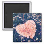 Love is Fragile Photography Magnet