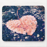 Love is Fragile Photography Mousepad