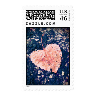 Love is Fragile Photography Postage