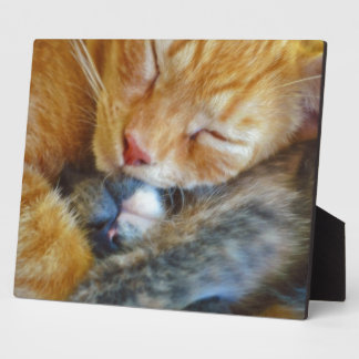 Love Is... Two Sleeping Kittens Cat-lovers Gift Display Plaques