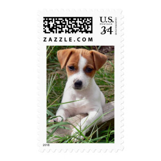 Love Jack Russell Terrier Puppy Dog Postage Stamps