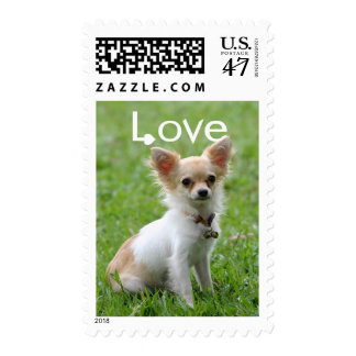 Love Long Haired Chihuahua Tan & White Puppy Dog Postage