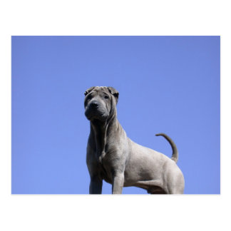 Love me, love my dog... post card