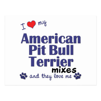 Love My Amer. Pit Bull Terrier Mixes (Multi Dogs) Postcard