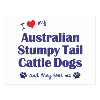 Love My Aust. Stumpy Tail Cattle Dogs (Multi Dogs) Postcard
