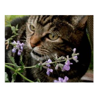 Love My Catmint Postcard