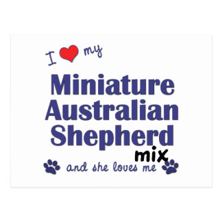 Love My Mini Australian Shepherd Mix (Female Dog) Postcard