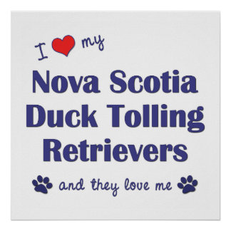 Love My Nova Scotia Duck Tolling Retrievers (They) Print