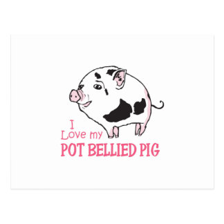 LOVE MY POT BELLIED PIG POSTCARD