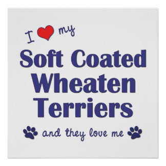 Love My Soft Coated Wheaten Terriers (Multi Dogs) Poster