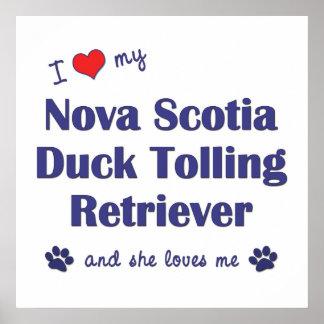 Love Nova Scotia Duck Tolling Retriever (Female) Poster