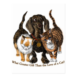 love of a cat postcard