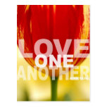 Love One Another Tulips Postcard