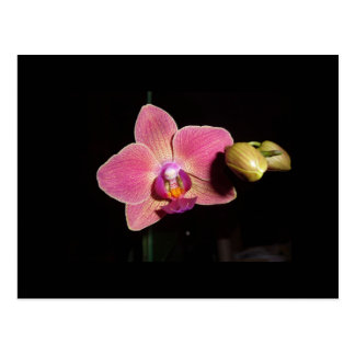 Love Orchid Flower   Card Postcard