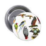 love parrots love these the 2nd in the series badges