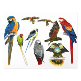 love parrots love these the 2nd in the series postcard