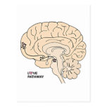 Love Pathway: Love in the Brain Post Cards