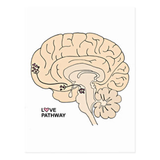 Love Pathway: Love in the Brain Postcard