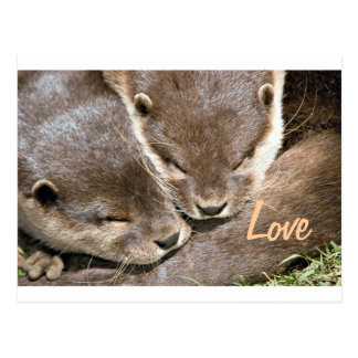 Love Quote - Otters Postcard