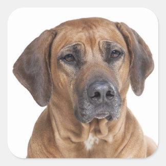Love Rhodesian Ridgeback Puppy Dog Stickers