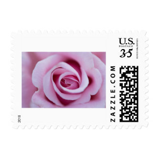 Love Rose Postage