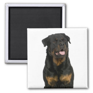 Love Rottweiler Puppy Brown & Black Dog Magnet