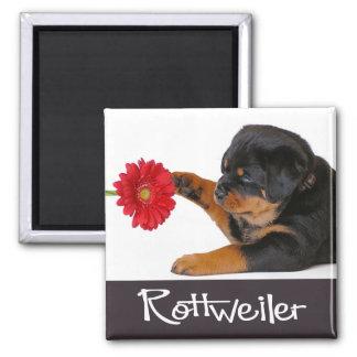Love Rottweiler Puppy Dog Black & White 2 Inch Square Magnet