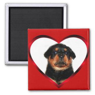 Love Rottweiler puppy magnet