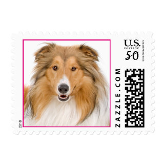 Love Rough Collie Puppy Dog Postage Stamps