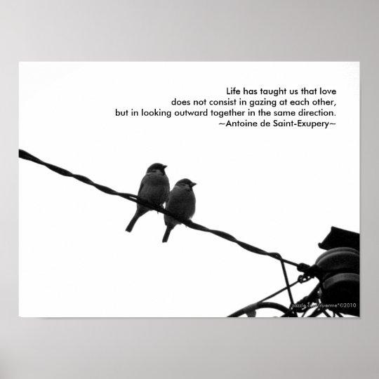 Citaten Kleine Prins : Love sparrow pair b w photo quote print zazzle