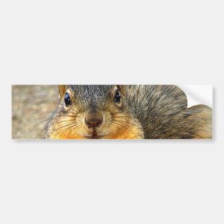 Love Squirrel_ Bumper Sticker