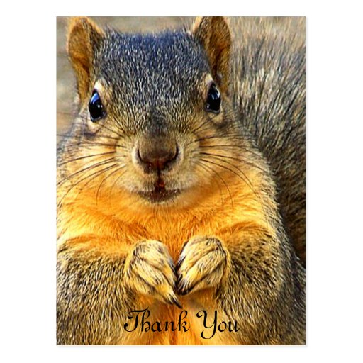 Love Squirrel_ Post Cards