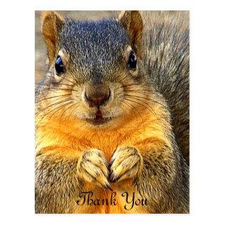 Love Squirrel_ Postcard