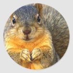 Love Squirrel_ Stickers